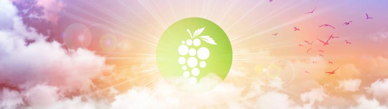 Bunch logo in sunrise